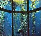 Monterey Bay Aquarium Image