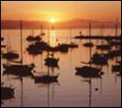 City of Monterey Website