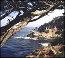 Pt. Lobos State Reserve